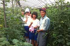 ハウス栽培きゅうりの収穫