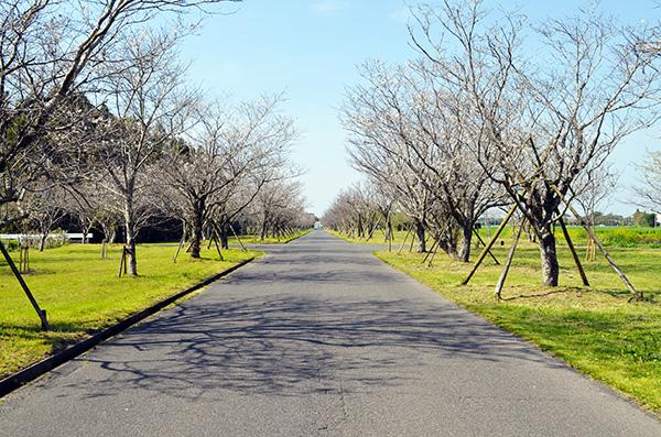 「串良平和公園」画像